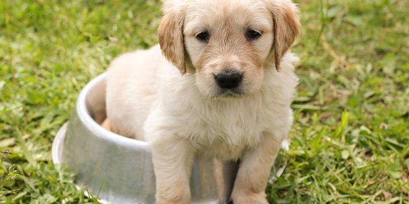 Hunde – Welpen